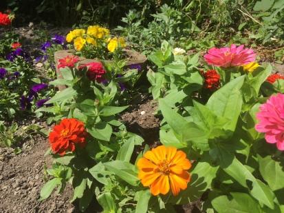 IMG_4783 tiny garden July Sheila